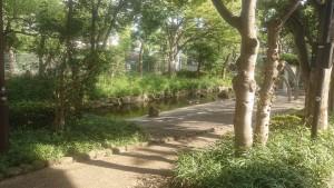 西小松川の小川